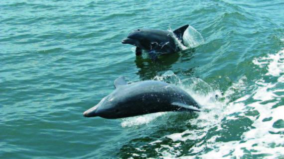 Kalpitiya-Dolphin-Watching