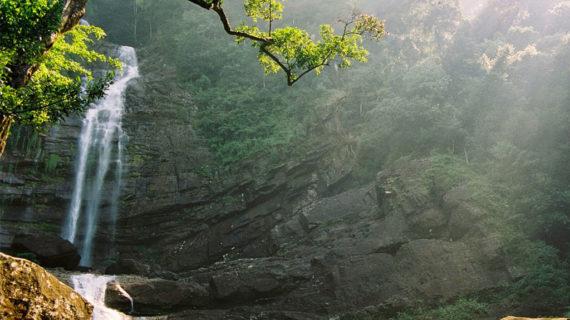 sinharaja-rain-forest