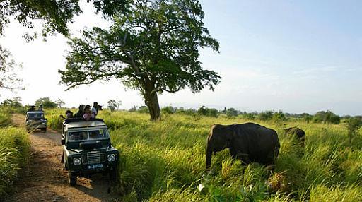 wasgamuwa_national_park